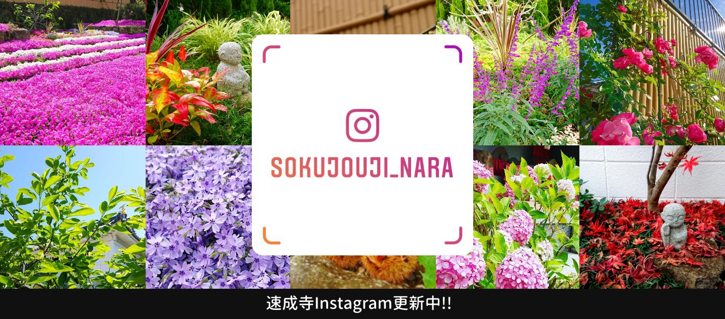 速成寺Instagram
